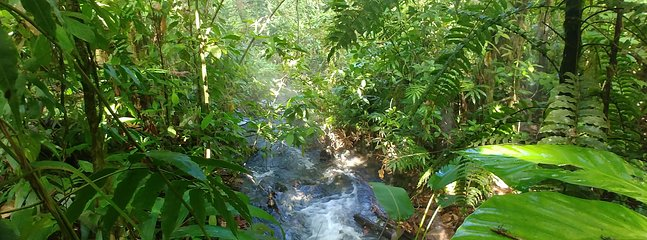 Rainforest of Rincon de la Vieja Volcano. It's only an one hour away from our cottages.