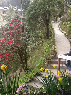 The walkway leading out of the cottage. Rhododendron and tulips in full bloom.