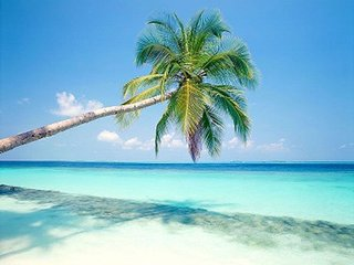 Comfortable STUDIO Apt 4mins to Beach, near Hotel Craydon