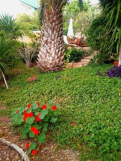 Owner's garden