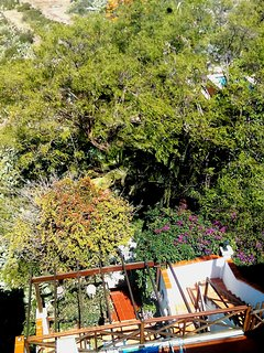 View of terrace and owner's garden.