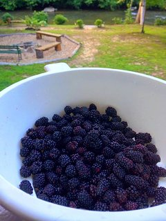 Blackberry picking season on the gravel road up to the cabin