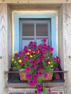 Blütenpracht im Sommer