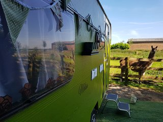 Glamping with Llamas in Melisa... Luxury, in a Field!