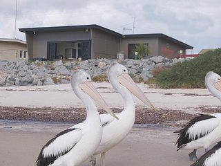 Absolute beachfront in Tumby Bay. The Beach House for short term rental.