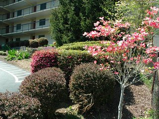 #304 - Gatlinburg Chateau - 2 Bedroom Condo
