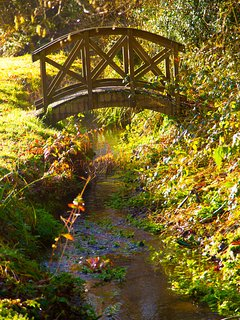 Bridge to woodland adventures