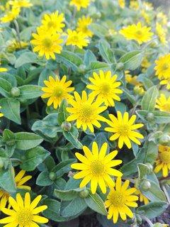 I fiori del giardino.