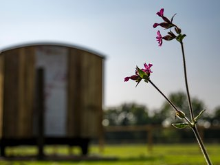 Suffolk Farm Stay in a Traditional Shepherds Hut - Hut No. #1