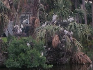 Egrets Pointe Townhouses 8