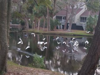 Egrets Pointe Townhouses 4