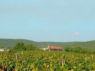 FeWo in Rovinj / Istrien / Kroatien bei den Weinfeldern