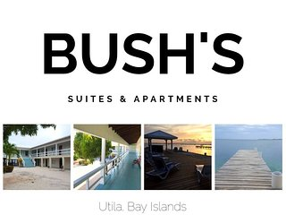 Bush's 'Turtle' Single Suite
