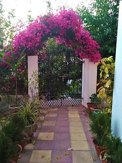 The entrance showered by pink bougainvillea offers a welcome respite from the hustle-bustle of city.