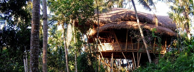 The view from the bamboo house is at canopy level, giving an amazing perspective of the jungle
