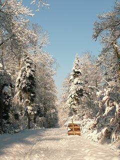 Le plaisir des balades en hiver