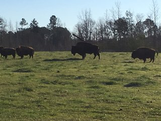 Bison Farmhouse in Greensboro / Lake Oconee