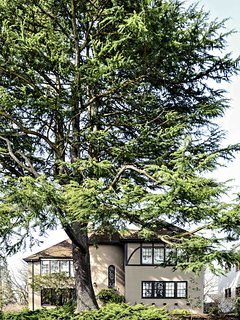 Modern Treehouse in Historic Spanish Turret House