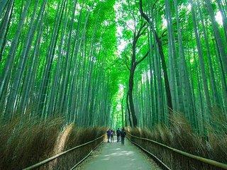 Arashiyama room A