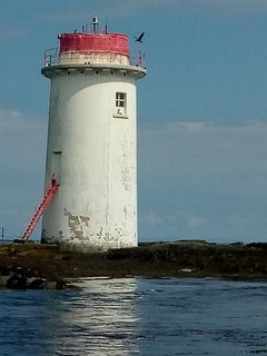 A cormorant lands on the lighthouse on Rock Angus at the entrance to Strangford Lough. Summer 2018.