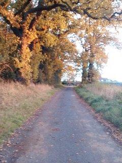 Autumn in East Ruston