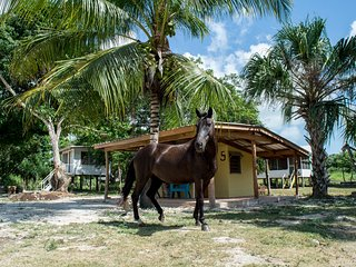 Cosy cabana in a tropical horse farm