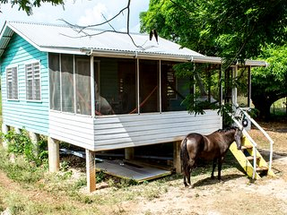 Wooden House in a tropical horse farm