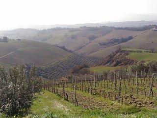 Le palme e le vigne