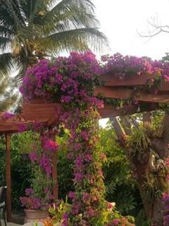 Grab some shade under the bugenvilla