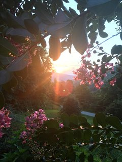 Sunset through the crepe myrtle.