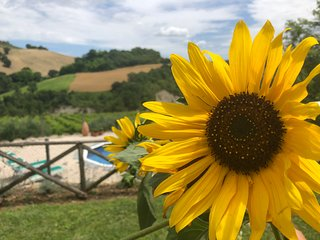 Villa in the Vineyard - apartment with private pool, organic vineyard, views