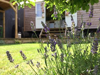 Esme's Escape - Luxury Shepherd's hut