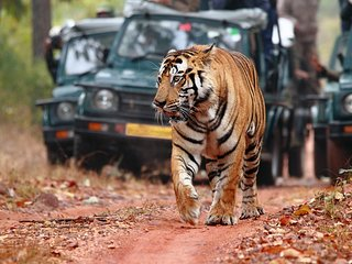 Wildlife Safari Holiday Tours