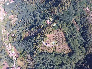 Over view of La Pianella properties Villa and farmhouse
