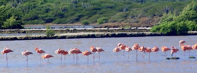 Stop by the Flamingo Park on the way to the Villa