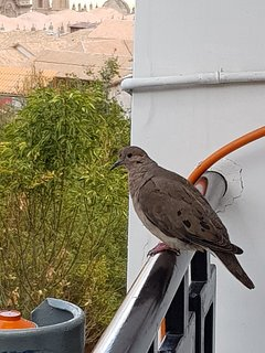 special guests the turtledoves