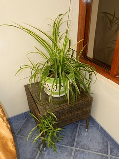 plant in dining-living room