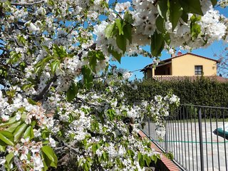 Apartment Papavero, between Volterra and San Gimignano