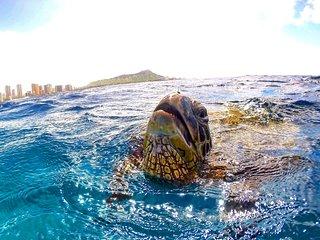 TROPICAL STUDIO  IN WAIKIKI (906) - 5 MIN TO BEACH -  !!! FREE PARKING & WIFI !!