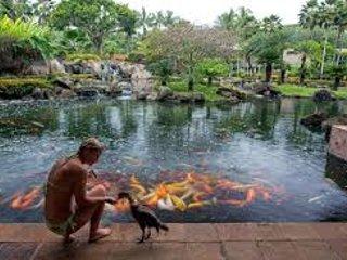 Marriott Kauai Beach Club Resort Lagoon