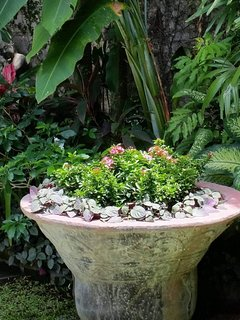 The great big antique pot in the garden..