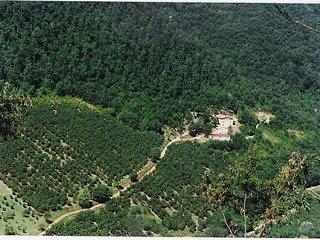 Casale nel bosco con Dependance