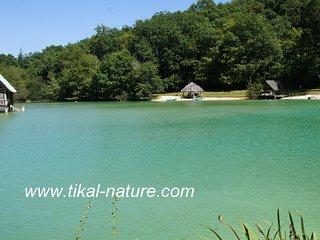 Tikal-Nature Le site complet