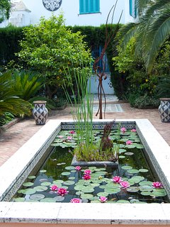 Lilly pond with gold fish