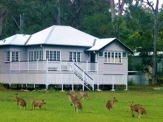 Lake Weyba Noosa Cottage & Friendly Kangaroos