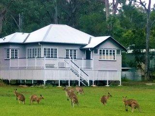 Lake Weyba Noosa Cottage & Friendly Kangaroos
