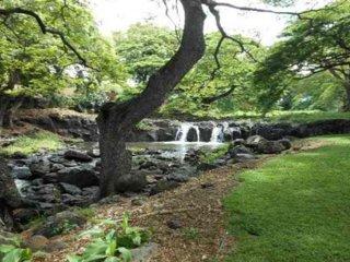 Royal Gardens, A Tropical Escape!