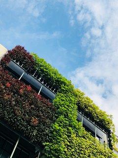 Cloude Stay Vertical Garden