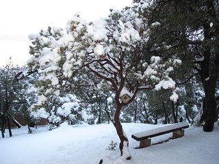 Snow (Jan-April) at Paradise Pines Retreat, a private cozy cabin