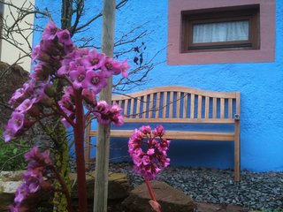Blaues Haus - Grüne Oase